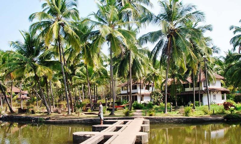 02 Totaima (Kerala) (69)