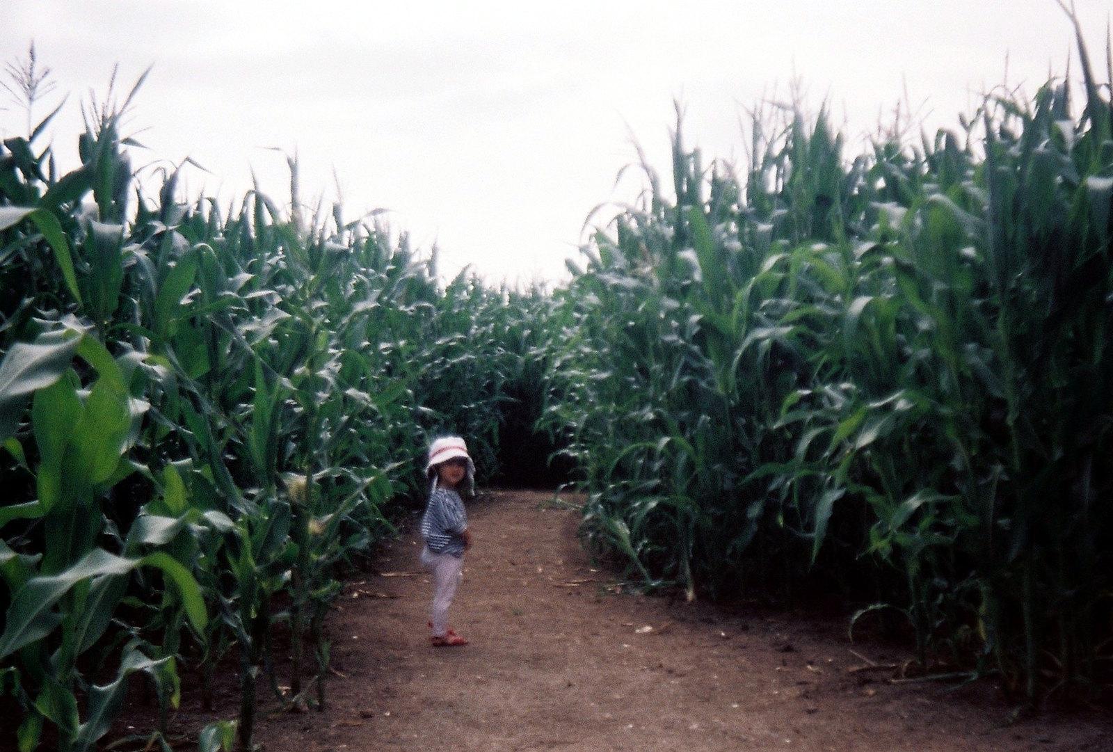 Braydon Maize Maze