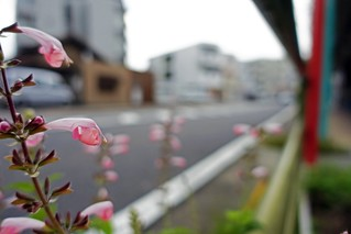 The flowers in commuting 2014/09 No.2.
