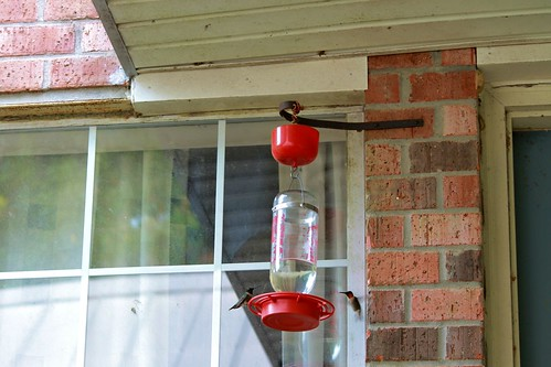 CrabAppleLane Hummingbirds - August 31, 2014