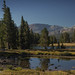 Morning Light on Dana Meadows (Yosemite High Country) by Robin Black Photography