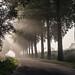 Foggy morning by W. Riezebos
