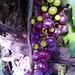 Grapes Tochtepec