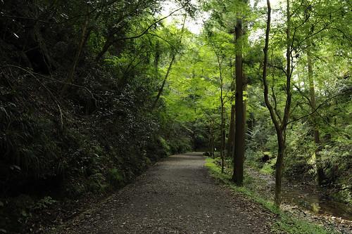 green forest nikon trail 愛知 aichi 緑 森 shinshiro 新城 東海自然歩道 atera d3s 阿寺 afszoomnikkor2470mmf28ged 阿寺の七滝 ateranonanataki tokainaturetrail
