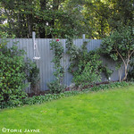 Garden fence painted