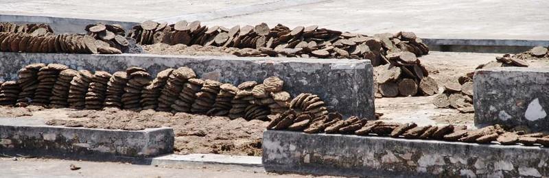175 combustible hecho con estiercol en casa de vacas en Natwara (8)