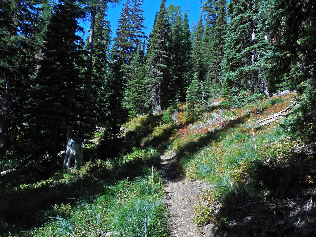 Terrace Lake trail, Cube Iron - Silcox Roadless Area, western Montana