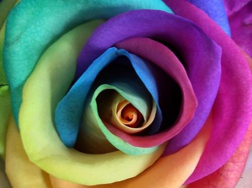 Foto 5- Flores com cores exoticas que encantam