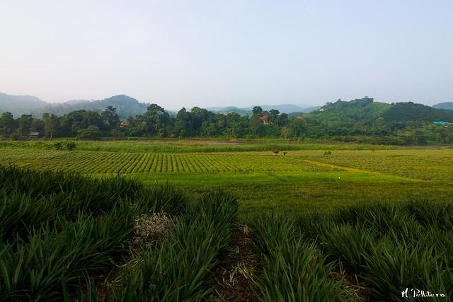 Arrozales - Chiang Rai