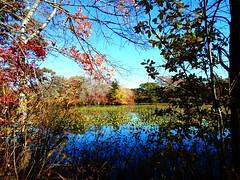Mill Pond Park -- Autumn (65)