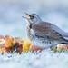 ... Frost Bite ... by Grandpops Woodlice