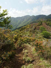 Trail from Mount Sannoto to Mount To @ Hike to Mount Oyama & Mount To