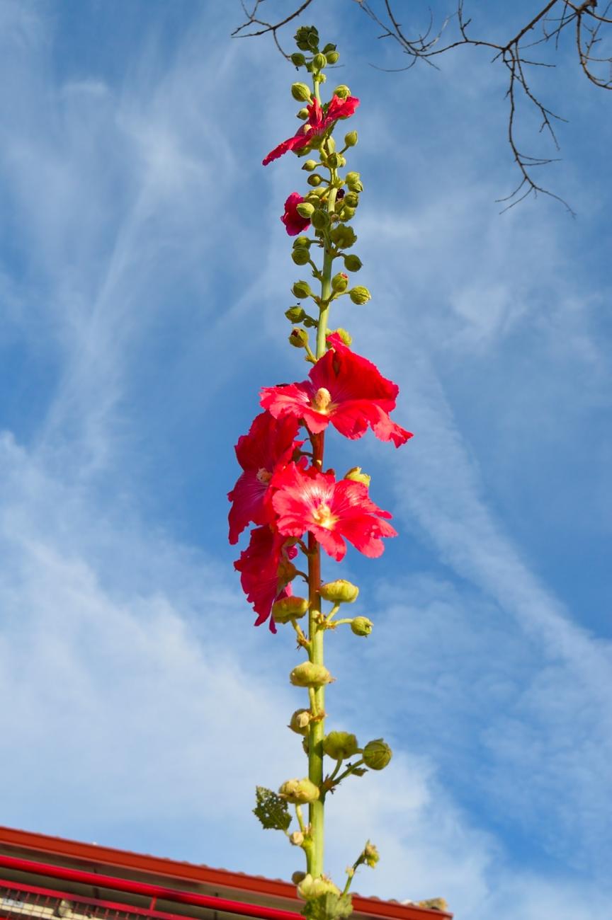 lara-vazquez-madlula-blog-style-flower