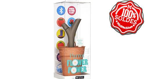 parrot-flower-power