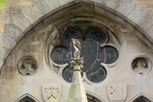 Cathedral Hawk Fledgling (2448)