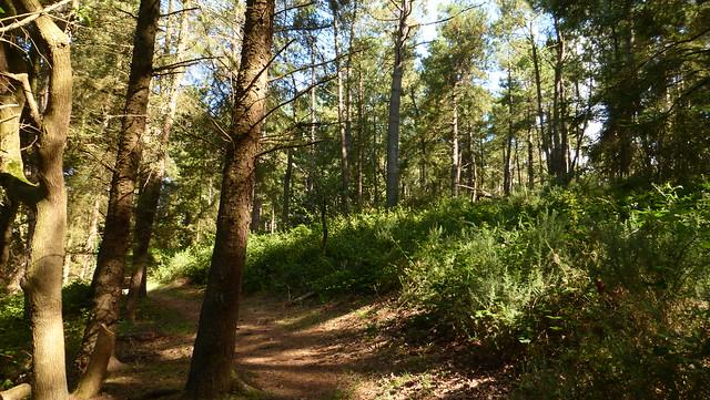 012a Sentier de découvertede la Montagne, Lessay