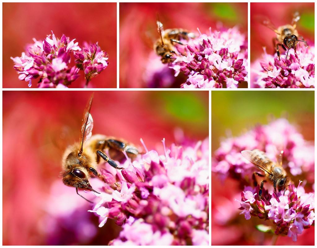 Bee in the garden by Shu'gi