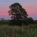 WA_8906_sunset