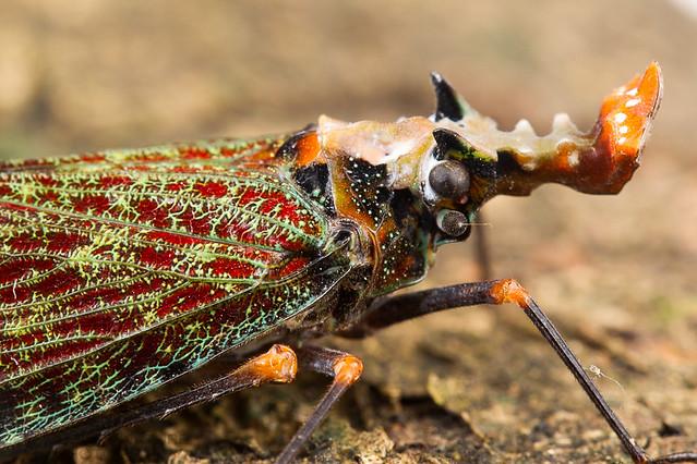 Lantern Bug 20130928_2211