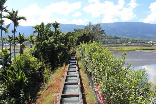 盛土圳以浮圳西水東引,灌溉出綠油油的水稻田。