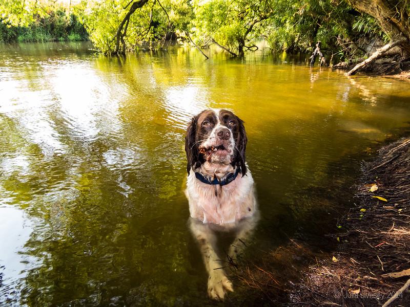 Max has a morning swim