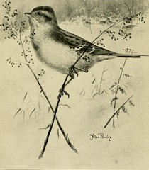 """Image from page 357 of """"Gray lady and the birds; stories of the bird year for home and school"""" (1907)"""