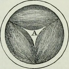 """Image from page 330 of """"Human physiology"""" (1856)"""