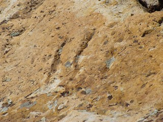 Image of Dinosaur tracks. colorado crocodile morrison hogback dinosaurridge morrisonfossilarea nationalnaturallandmark dinoridge
