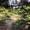 #hiking #birthdaymountain #bluemountain #olympicmountains #olympicnationalforest #washington #myweekend