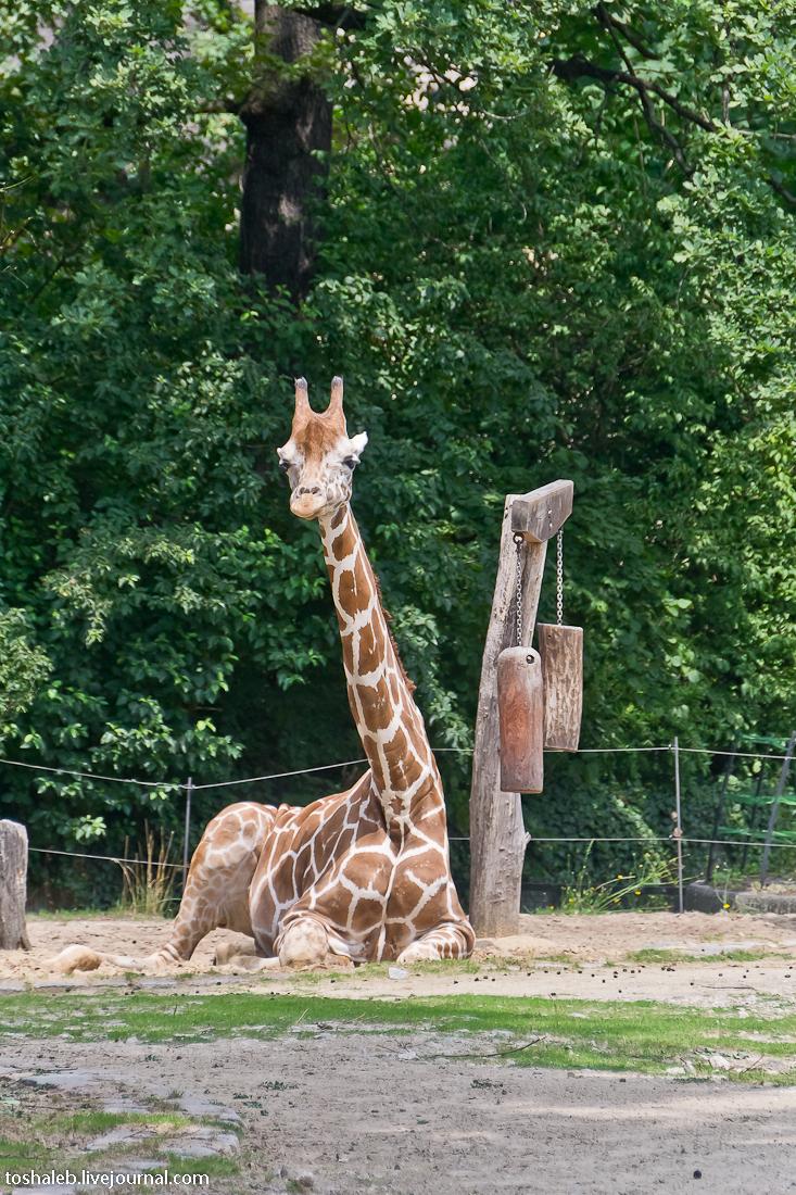 Берлин_зоопарк-38
