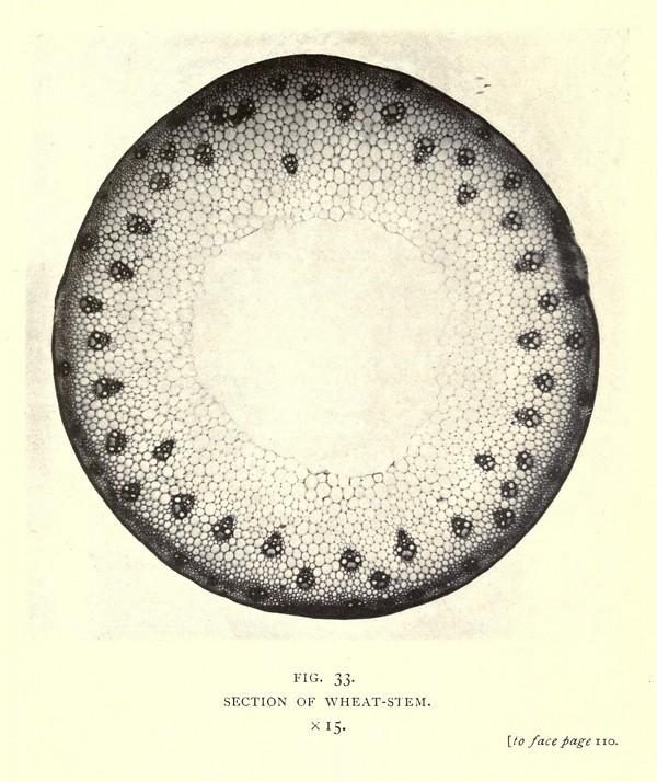 smith-circle