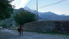 Krowa na środku ulicy w Stepancminda.