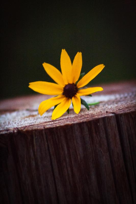 flowersix