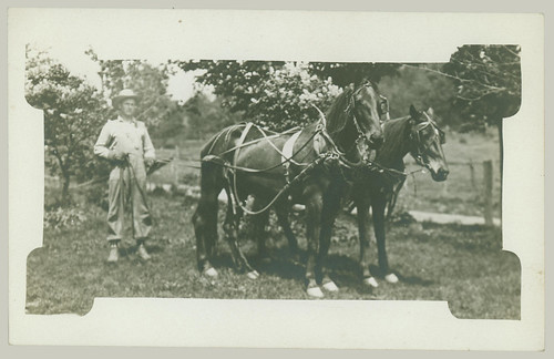 Man and pair of horses