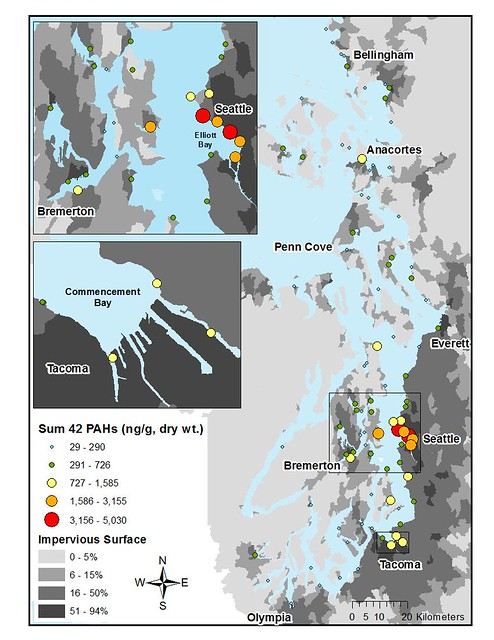 Map of PAHs in Puget Sound Shellfish