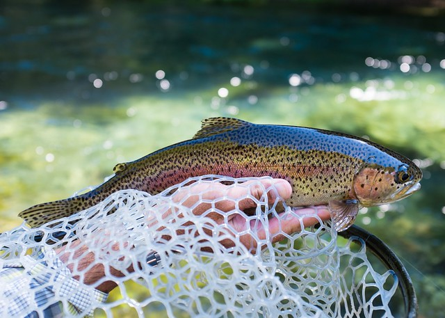fall-fly-fishing-mckenzie-river