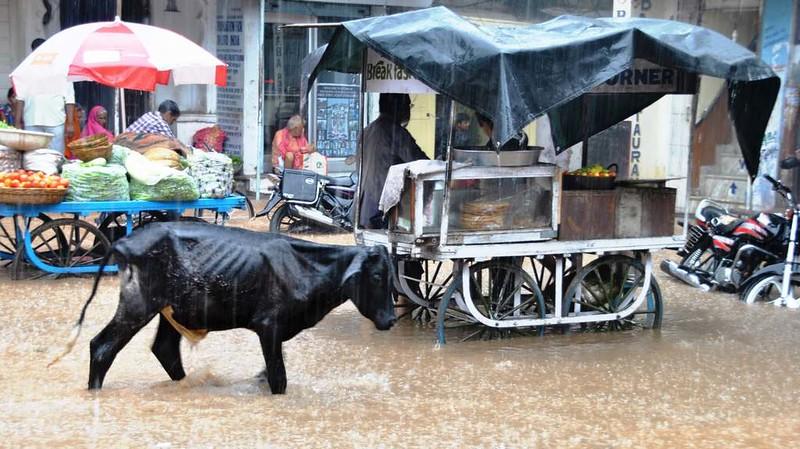 486 Ultimos dias en Pushkar  (15)