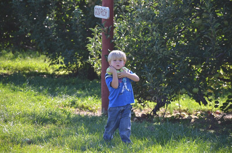 Boyd Orchards 2014