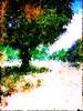 Tree - September