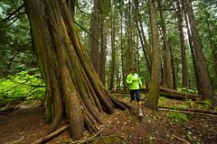 Trail running in Whistler