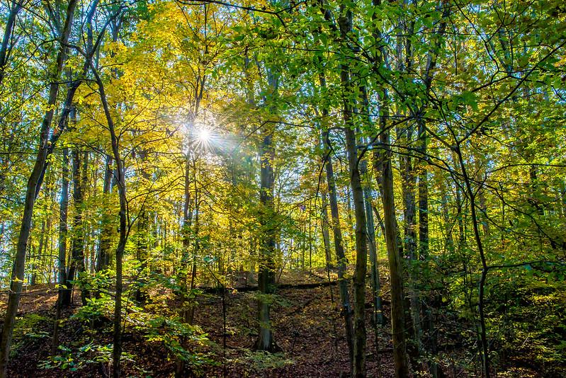 Jackson-Schnyder Nature Preserve - October 23, 2016