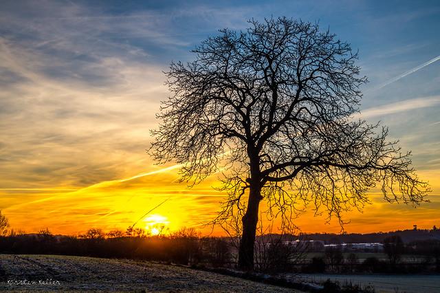 Sunrise tree, Sony SLT-A58, Sony DT 18-55mm F3.5-5.6 SAM II (SAL18552)