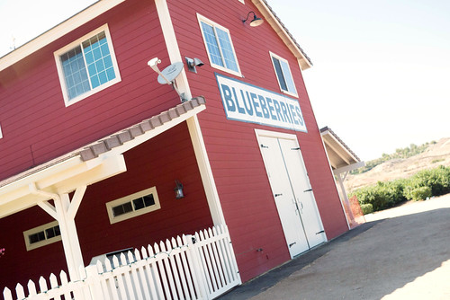 blueberry34