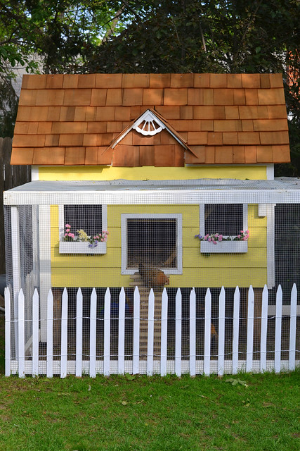 The Little Yellow Coop