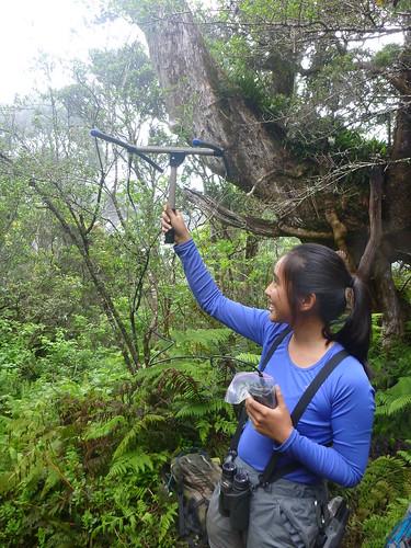 ʻĀkohekohe crew member Lynn Zhang using her antenna to track birds.