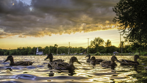china sunset water maine ducks chinalake kennebeccounty