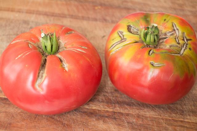 It's raining tomatoes!_6