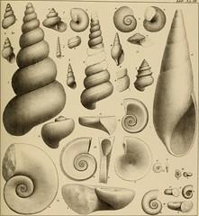"""Image from page 120 of """"Lethaea rossica, ou, Paléontologie de la Russie"""" (1852)"""