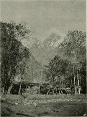 "Image from page 209 of ""Karakoram and western Himalaya 1909, an account of the expedition of H. R. H. Prince Luigi Amadeo of Savoy, duke of the Abruzzi"" (1912)"