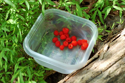 Wild wineberries by Eve Fox, The Garden of Eating, copyright 2014